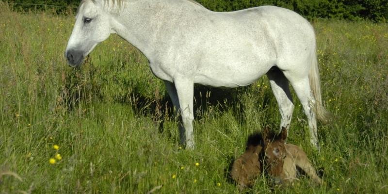 VTB_cheval