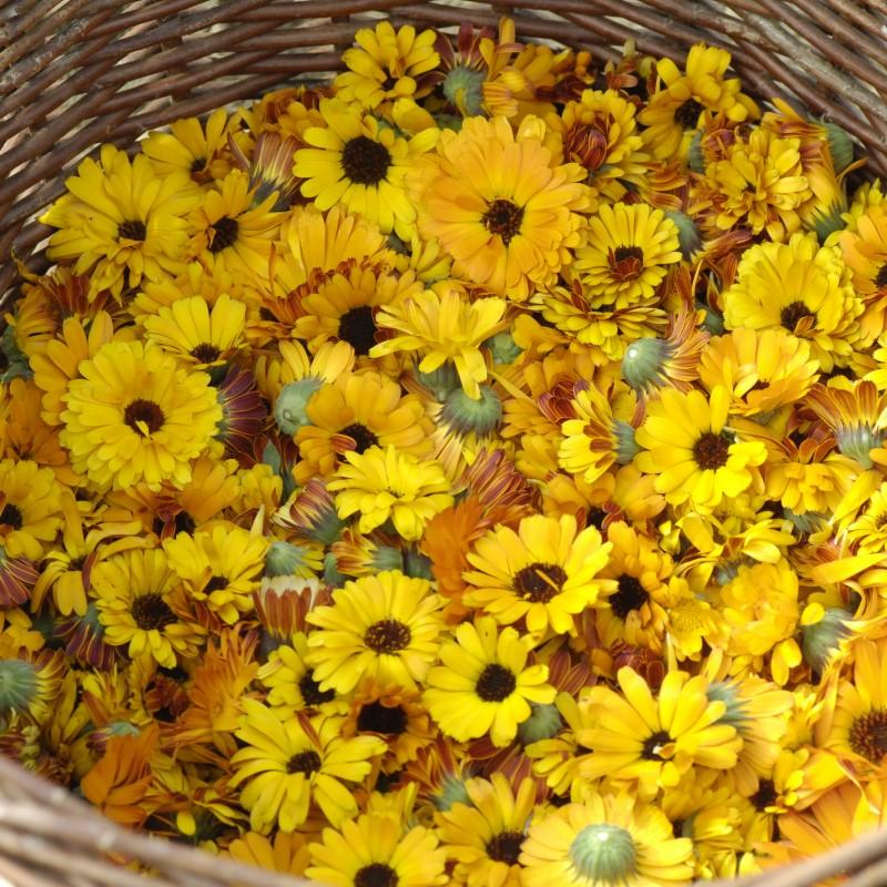 VTB presentation fleurs carre