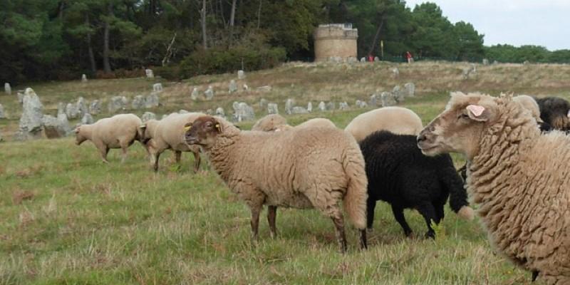 VTB moutons